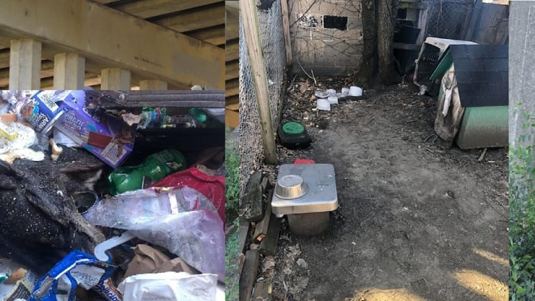 DOG FROZE TO DEATH FROM FRIGID TEMPERATURES AND DUMPED IN TRASH