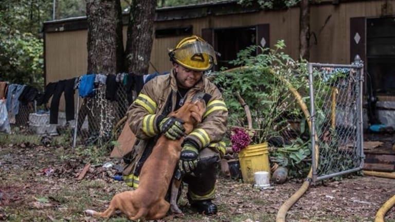 Dog Gets Rescued