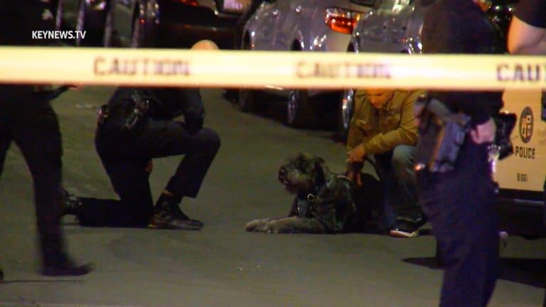 Woman Killed, Dog Shot in Koreatown in January, Suspect Now in Custody