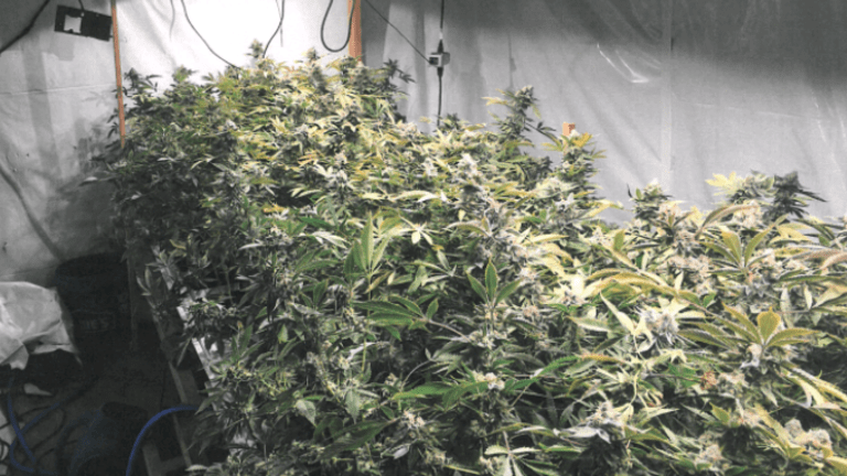 MARIJUANA GROW HOUSE RAIDED, EQUIPPED WITH IRRIGATION SYSTEM AND FANS