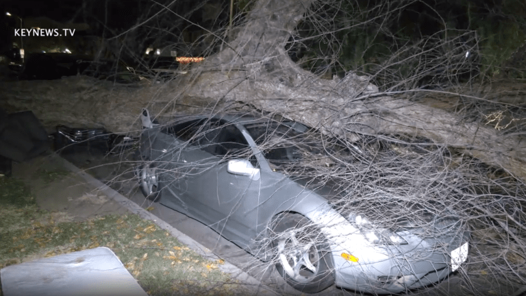 Large Tree Lands on Two Vehicles in Windy Panorama City