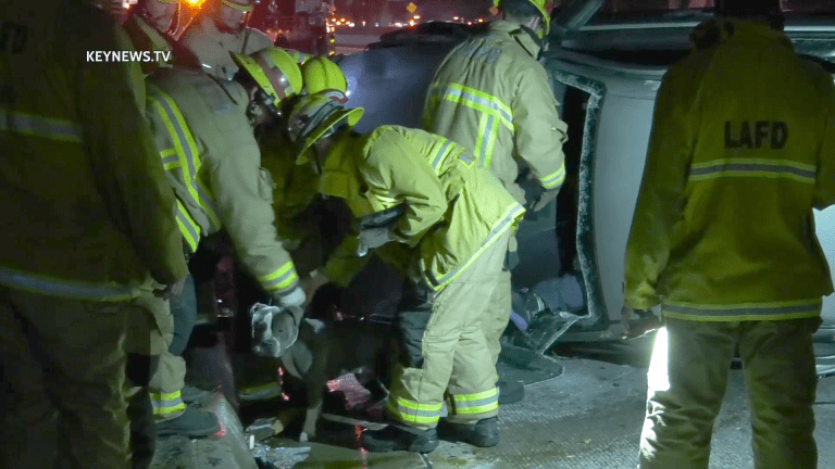 10 Freeway Vehicle Rollover Traps Pitbull Dog and Man, Dog Tries to Flee