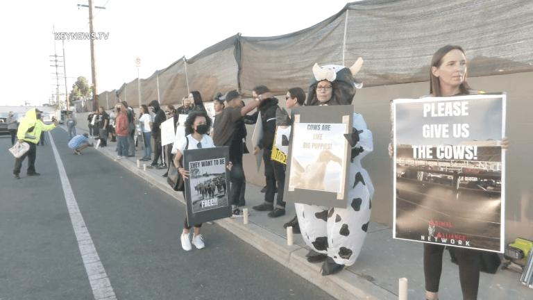 Crowd Gathers for Vigil at Slaughterhouse Where Cows Escaped in Pico Rivera