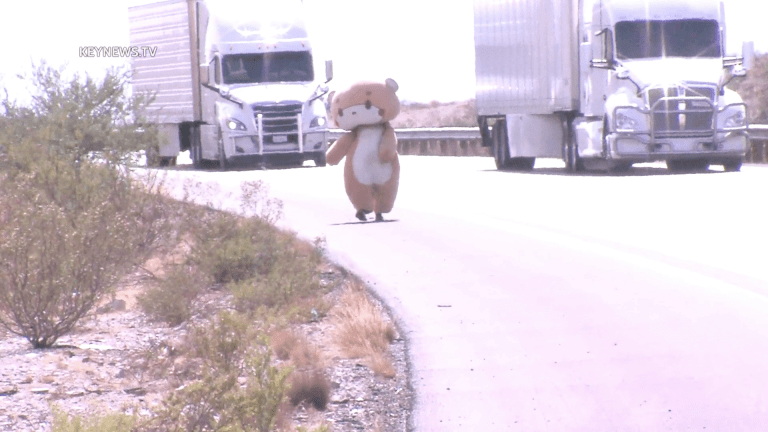 Man in Bear Costume is Walking from California to New York for Charities