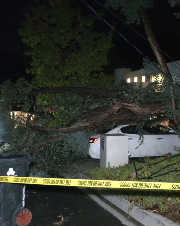 Tree Lands on Maserati in Brentwood