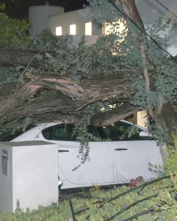 Tree Lands on Maserati in Driveway of Brentwood Home
