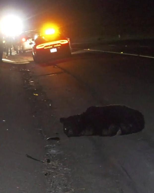Bear Struck and Killed on 5 Freeway