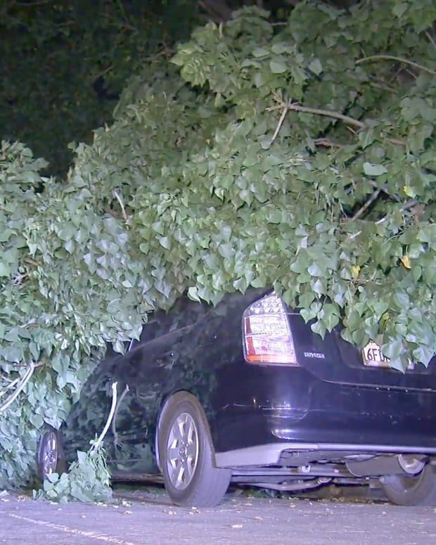 Tree Branch Falls on Cars in Hollywood