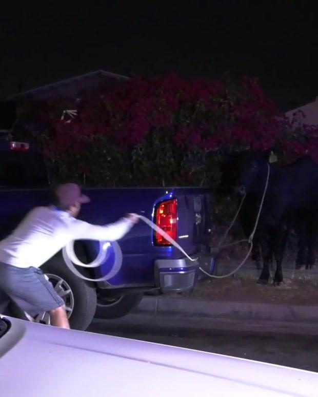 Pico Rivera Cow Stampede