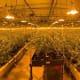 Marijuana drug bust yields $10 million in cash